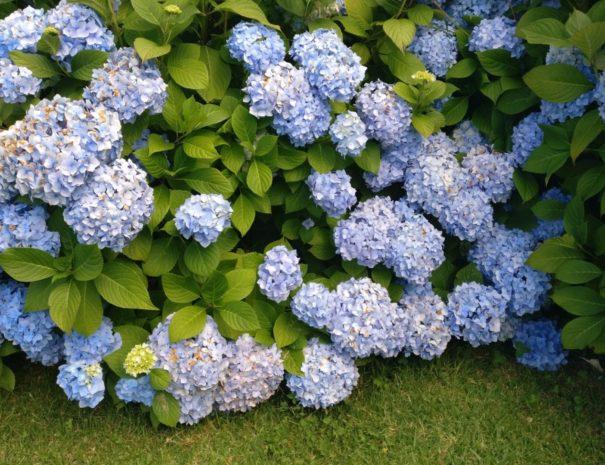 flores-por-todas-partes